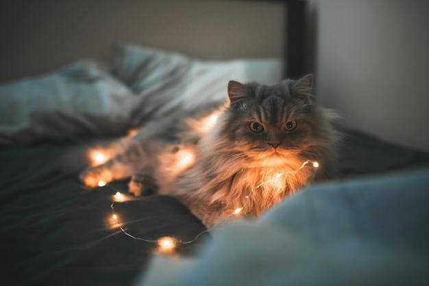 Graue flauschige katze liegt mit lichtern in den girlanden in einem gemütlichen bett