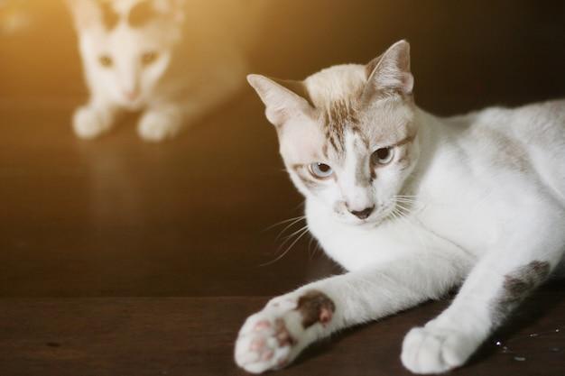 Graue gestreifte katze genießen und entspannen sich auf bretterboden