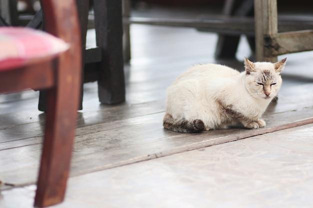 Graue gestreifte katze genießen und sitzen auf holzfußboden.