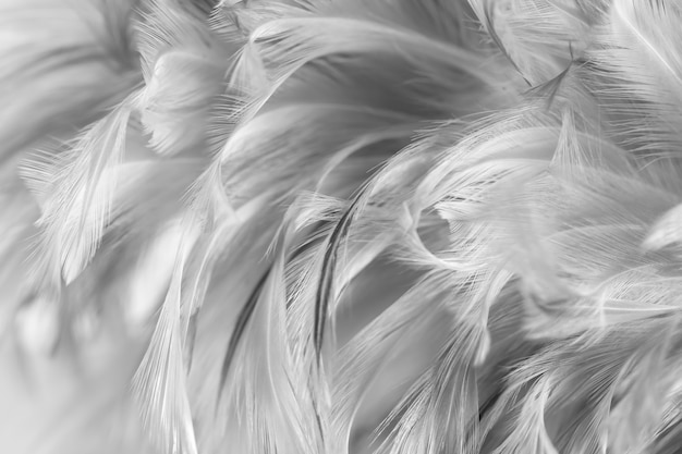 Graue hühnerfedern in der weichen und unschärfeart für hintergrund, schwarzweiss