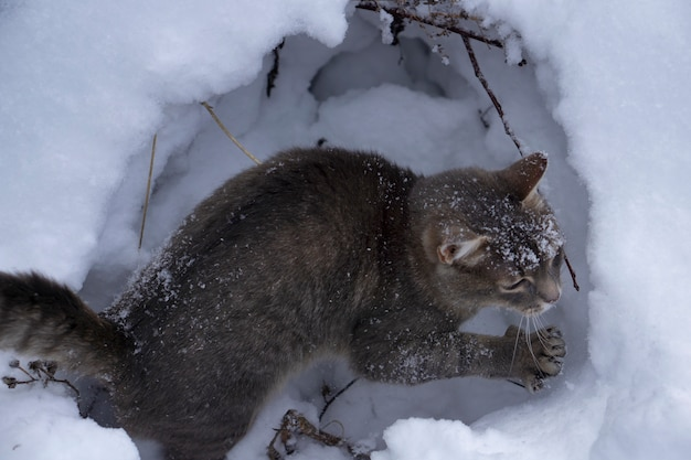 Graue katze auf weißem schneehintergrund