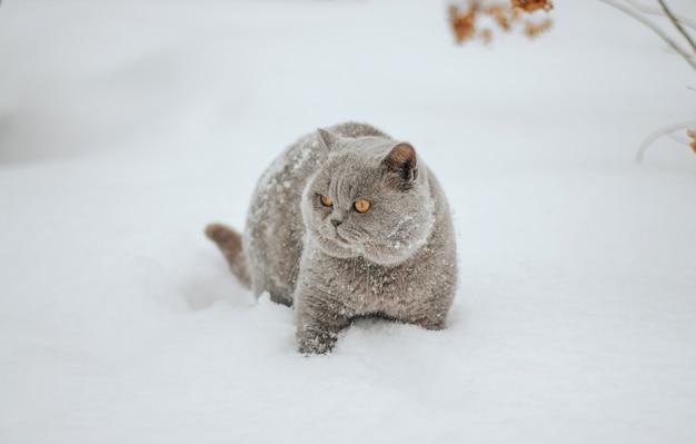 Graue katze, die durch eine schneewehe geht