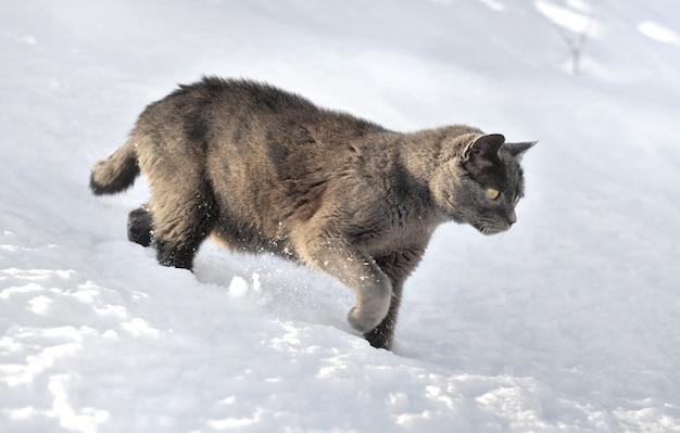 Graue katze, die in den schnee geht