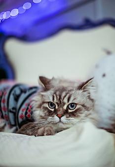 Graue katze im blauen pullover liegt auf weißer decke