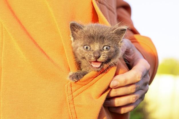Graue katze in händen. kätzchen lächelnd sitzt in der tasche der orange kleidung. speicherplatz kopieren