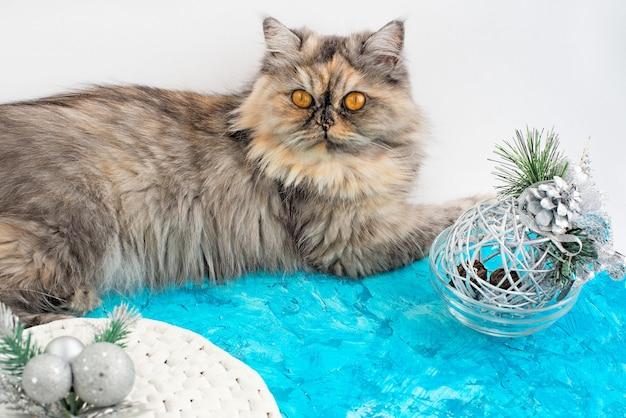 Graue katze mit gelben augen und weihnachtsdekor