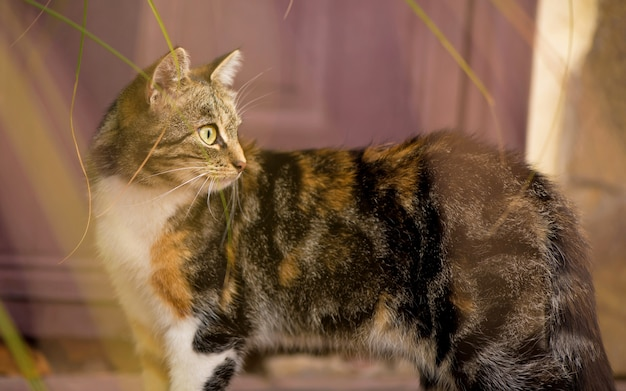 Graue katze mit grünen augen, die katze nahe dem haus sitzen. flauschige katze, schönes haustier tier. außerhalb wildkatze. katze auf der straße