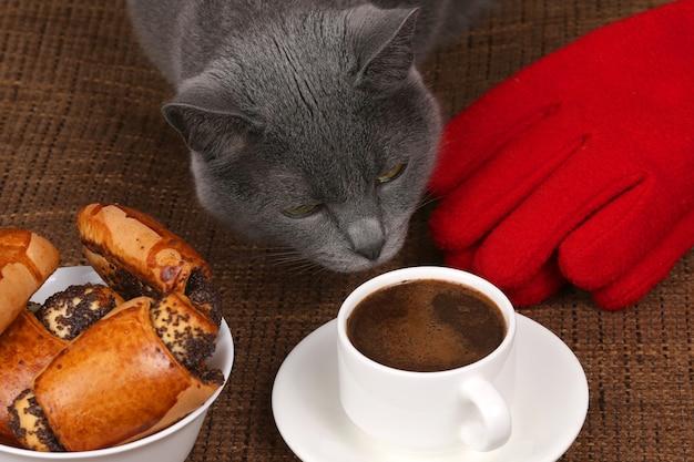 Graue katze schnüffelt an einer weißen tasse schwarzen kaffee