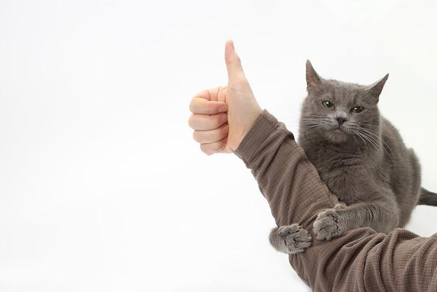 Graue katze umarmte die hand des mannes