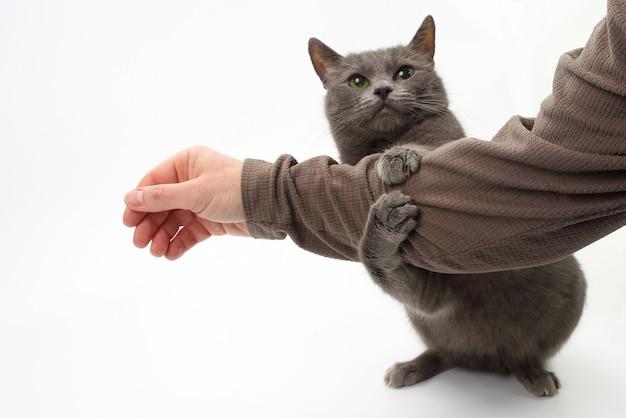 Graue katze umklammerte seine pfoten die hand eines mannes isoliert