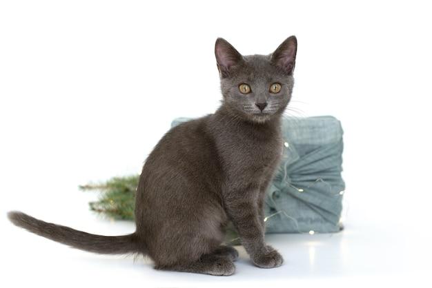 Graue katze und verpackungsgeschenke im stofffuroshiki-stil. umweltfreundliches konzept. diy. isolieren