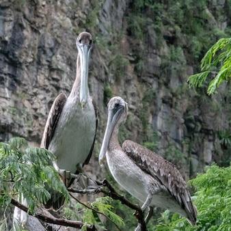 Graue und weiße vögel stehen auf einem ast eines baumes vor einer klippe