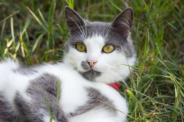 Graue weiße katze auf dem grünen gras, das katze im sommer spielt