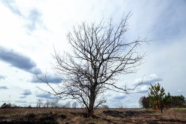 Graue wolken des trockenen baums der naturlandschaft, dürre