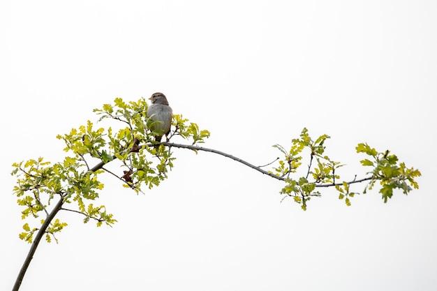 Grauer vogel thront auf ast