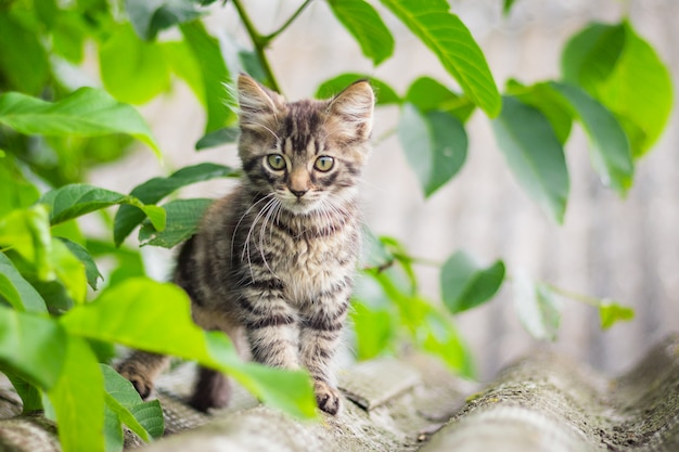 Graues flauschiges kätzchen im garten unter dem grünen gras