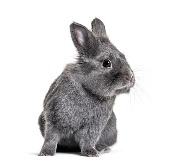 Graues junges kaninchen, das vor lokalisiert steht