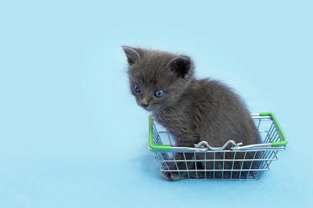 Graues kätzchen mit einem einkaufskorb. einkaufen für tiere. tierhandlung, tiermarkt.