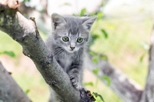 Graues kätzchen mit grünen augen auf einem baum