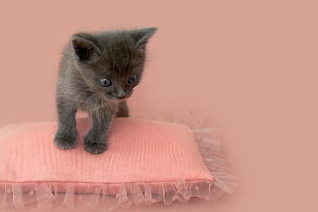 Graues kätzchen mit krallen auf einem rosa kissen