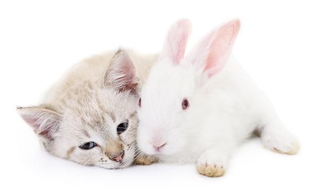 Graues kätzchen mit weißem kaninchen auf weiß.
