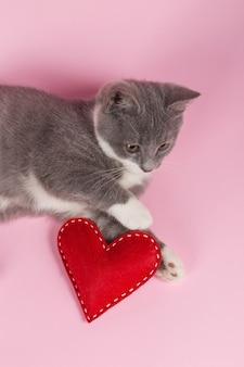 Graues kätzchen spielt mit rotem herzen auf rosa