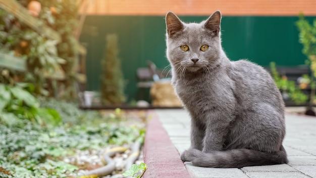 Graues kätzchen wird beim sitzen auf einem pflasterweg im garten gewaschen.