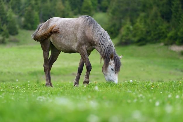 Graues pferd auf der weide im frühling