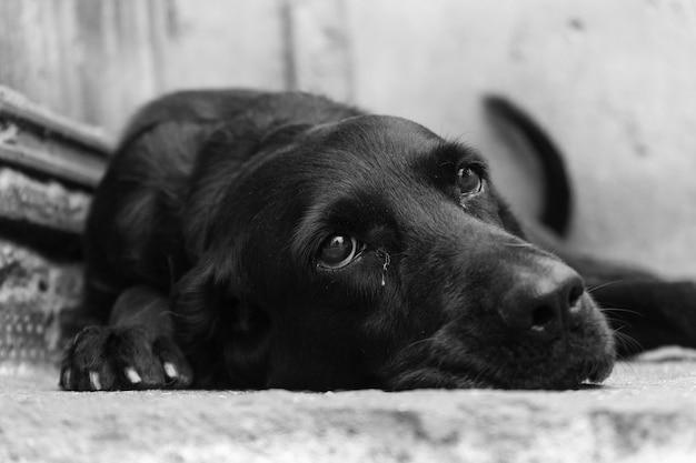 Graustufen-nahaufnahmeaufnahme eines niedlichen schwarzen hundes, der auf dem boden liegt