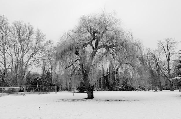 Graustufenaufnahme eines schönen baumes im park, der im winter mit schnee bedeckt wird