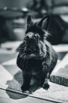 Graustufenfotografie von kaninchen