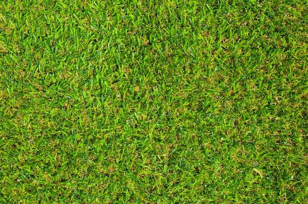 Green grass textur hintergrund