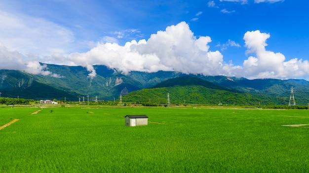 Green reisfeld hohe berge sind mit blauem himmel bedeckt.