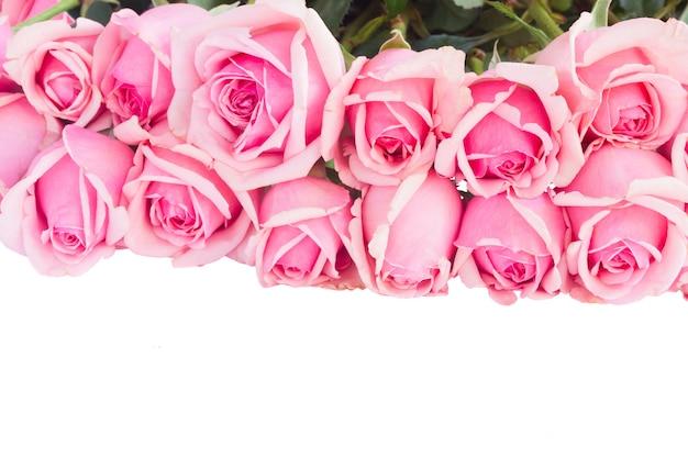Grenze der frischen rosa rosen lokalisiert auf weißem hintergrund