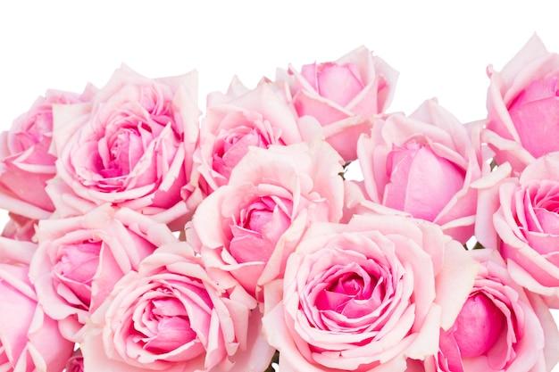 Grenze der rosa blühenden rosen lokalisiert auf weißem hintergrund