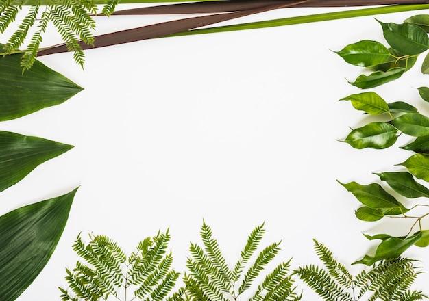 Grenze der sortierten pflanzenblätter