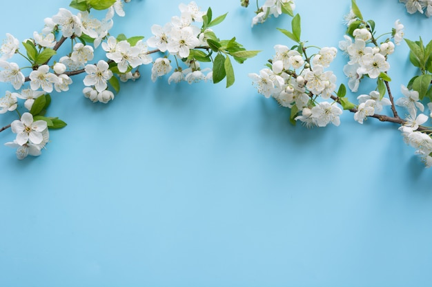 Grenze der weißen blüte des frühlinges verzweigt sich auf pastellblau. blumen. exemplar hintergrund