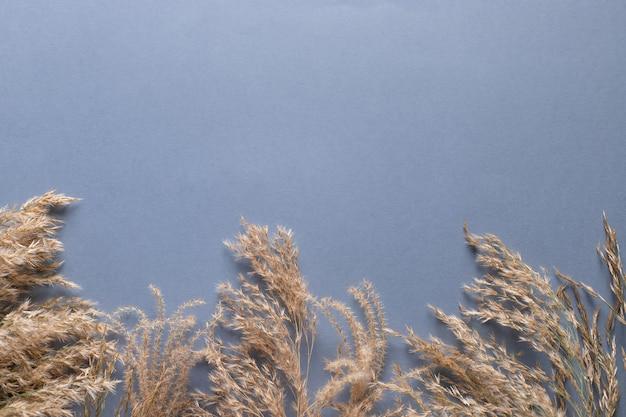 Grenze des trockenen pampasgrases