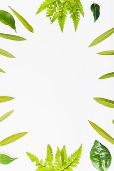Grenze von hellen pflanzenblättern
