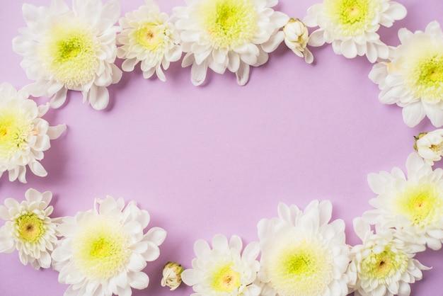 Grenze von weißen gänseblümchen