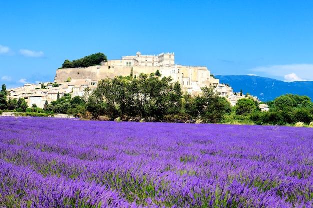 Grignan mit lavendelfeld, departement drome, rhône-alpes, frankreich