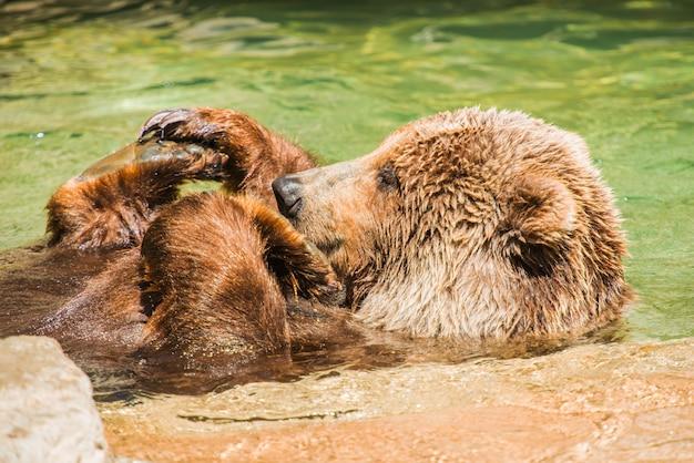 Grizzlybär wasserspaß