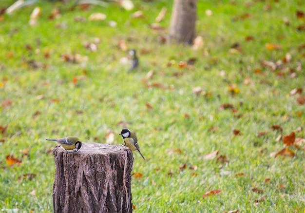 Größerer meisenvogel, der auf einer samenkanne sitzt
