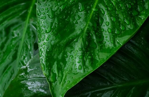 Großaufnahme des regens fällt auf blatt