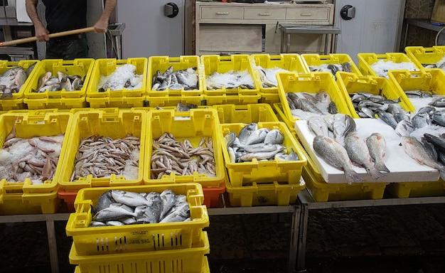 Große auswahl an frischem fisch auf dem markt der altstadt von akko