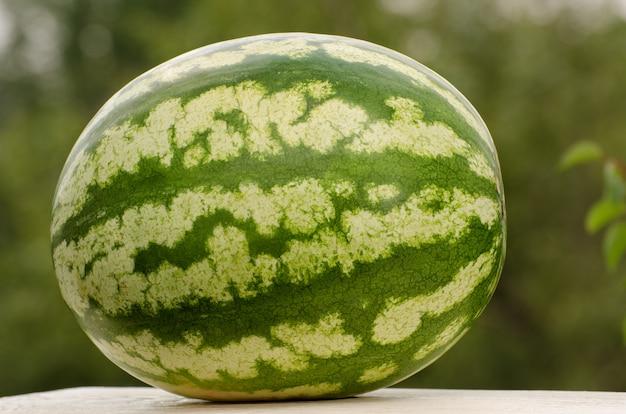 Große ganze wassermelone