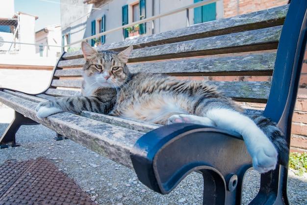 Große getigerte katze, die auf sonniger bank in santarcangelo italien europa sitzt