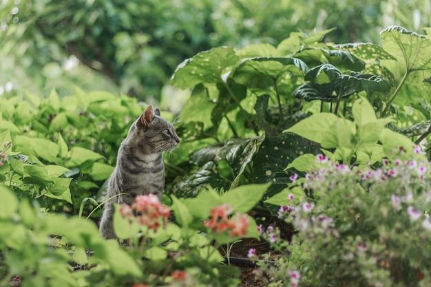 Große graue katzenjagd im park.