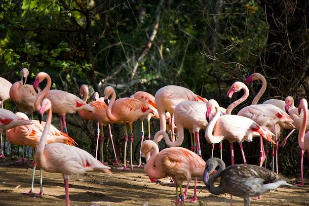 Große gruppe von flamingos in deutschland.
