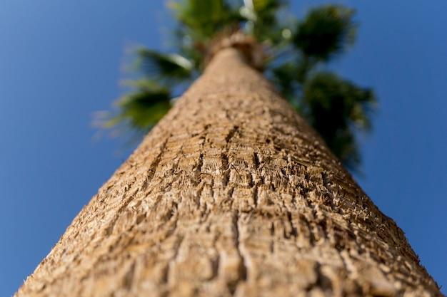 Große kokospalme gegen blauen himmel